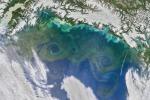 Fioritura di alghe, nel Golfo dell'Alaska il 9 giugno 2016. L'immagine è stata ripresa dal satellite Suomi (fonte: NASA's Earth Observatory)