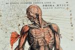"""Trovato il """"software"""" genetico che modella gli organi"""