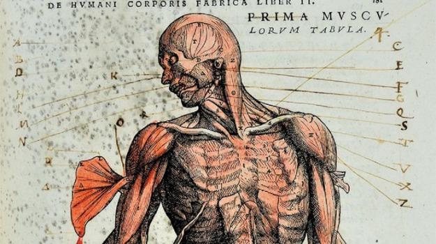 genetica, organi, Scienza Tecnica