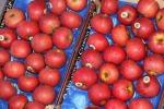Frutta fresca: in Italia cala la produzione di mele, pere e kiwi