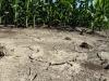 Allarme siccità in Calabria, la Sorical invia dossier ai prefetti