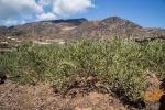 Agricoltura in Calabria, in pagamento 29 milioni di euro per la Domanda Unica