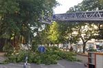 Cade albero in centro, chiusa la via Garibaldi