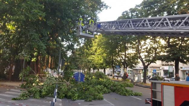 albero caduto, via garibald, Messina, Archivio
