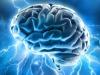 Il cervello ha imparato a dormire 450 milioni di anni fa