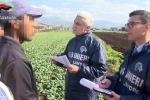 Ok Commissioni a direttiva pratiche sleali agricoltura