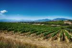 Anthilia Capital sottoscrive bond vinicola Velenosi