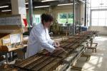 Qualità della pasta a rischio per semi non certificati
