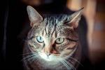 Mayor in Abruzzo bans feeding stray cats