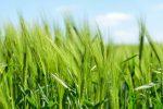 """Fondi per giovani agricoltori, in Calabria è """"caos"""" dopo una sentenza del Tar"""