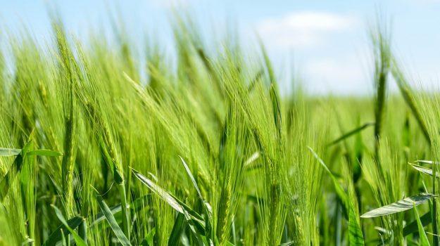 calabria, fondi regione tar, giovani agricoltori calabria, tar calabria, Gianluca Gallo, Reggio, Calabria, Politica