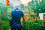 Corigliano Rossano, due arresti per evasione e coltivazione di sostanze stupefacenti