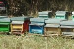 Scandale, sequestrate 82 arnie irregolari ad un apicoltore Catanese