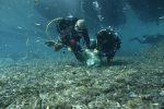 Lampedusa senza plastica, ripuliti i fondali della Tabaccara: raccolti 15 sacchi di rifiuti