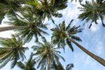 """Isola di Capo Rizzuto, la comunità musulmana dona una """"palma della fratellanza"""""""