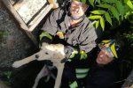 Lamezia Terme, vigili del fuoco salvano un cane caduto in un canale sottostrada