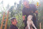 I vigili del Fuoco di Sellia Marina salvano un cucciolo di cane