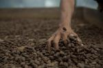 Tracciabilità cibo parte dal seme per il 91% degli italiani