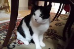 Il gatto l'amico del cuore, adottarlo allunga la vita