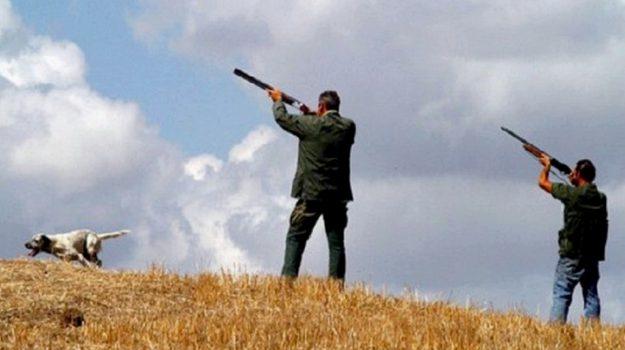 caccia in Calabria, divieto di caccia, tar calabria, Calabria, Cronaca