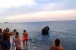 Calabria, l'elefante scappa dal circo a va al mare a farsi un tuffo tra i turisti