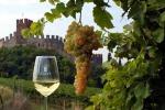 I vini bianchi italiani sono i più venduti al mondo