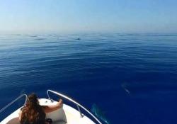 Il filmato realizzato alle isole Eolie dall'associazione Filicudi Wildlife Conservation