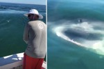 Il pescatore cattura il pesce, ma poi arriva lo squalo