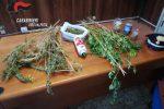 Piantagione di marijuana scoperta a Gerocarne, arrestato un uomo