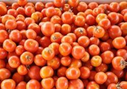 Salone del Gusto, i nuovi pomodori presidio Slow Food presenti a Torino