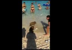 Su Facebook circola il filmato dei bagnanti che sul bagnasciuga dell'oasi naturalistica in provincia di Trapani si sono imbattuti in cuccioli di cinghiali. Contenti soprattutto i bambini, non troppo i grandi