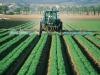 Regione Calabria, erogati 46 milioni di euro per gli agricoltori
