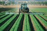 Agricoltura, Pacchetto Giovani 2016 in Calabria: istituita una task force, prorogato il bando
