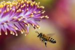 Olanda, lo studio: api addestrare a cercare campioni infetti da covid