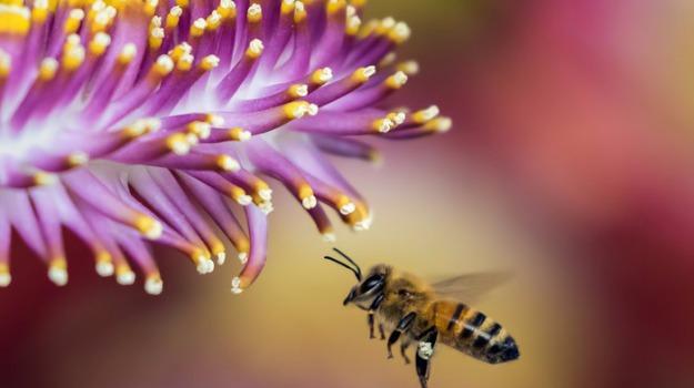 apicoltori, calabria, psr, Gianluca Gallo, Calabria, Politica