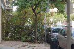 Palermo nella morsa dello scirocco, le foto degli alberi caduti in città