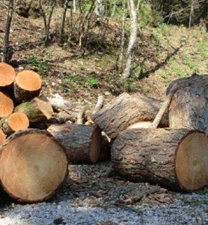 Stava tagliando un albero lungo la Statale, arrestato a Cirò Marina