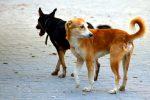 Rende, cani randagi ingabbiati all'ingresso dell'autostrada: i residenti chiamano il Comune