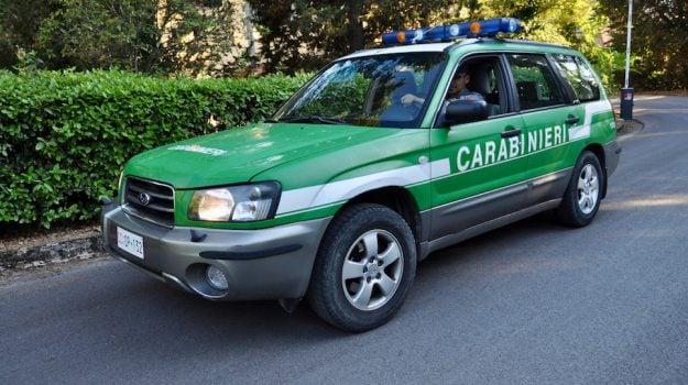 abuso edilizio, Parco di Cerchiara, quattro sequestri di animali, sanzioni amministrative, Cosenza, Calabria, Cronaca