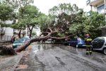 Alberi caduti, mareggiate e strade allagate a Messina: le foto