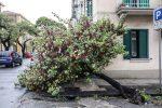 Nubifragi e vento, un bollettino di guerra: Messina è in ginocchio