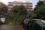 """Reggio, il """"Piano del verde"""" ancora non c'è e gli alberi diventano """"trappole"""""""