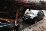 Allagamenti, alberi caduti, famiglie isolate: il maltempo flagella Reggio Calabria: tutte le foto