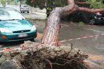 Maltempo a Messina, albero caduto invade la carreggiata: il video dei soccorsi