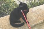 Milo, la favola bella del gatto nero e speciale