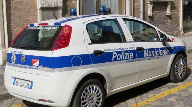 catanzaro, multe, multopoli, polizia municipale, Orlando Lagonia, Catanzaro, Calabria, Cronaca
