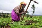 Fao e Ue ancora insieme contro la fame nel mondo (fonte: CIAT)