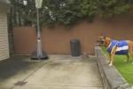 Basket, il cane fa l'assist per la schiacciata volante