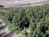 Droga in Sicilia, trovati 30 mila chili di marijuana ad Agrigento: sequestro da 15 milioni