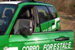 Cassano, va a funghi fuori dal comune: multato e messo in quarantena